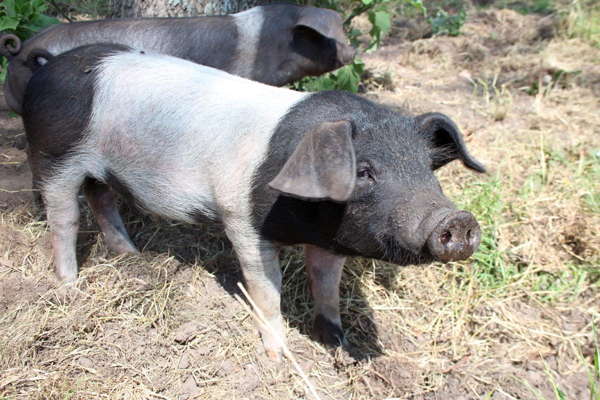 schwein-gehabt